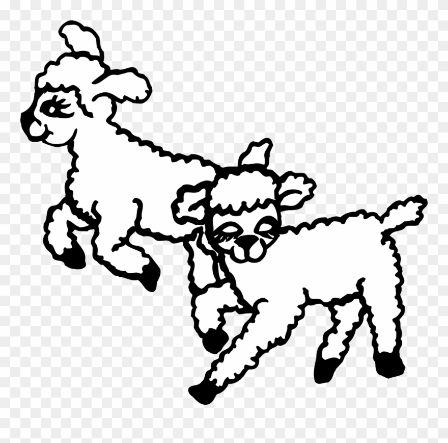 Lambs Playing Clipart