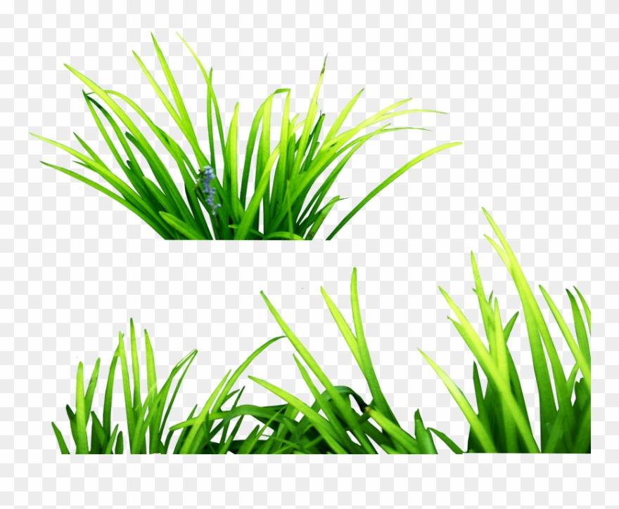 green grass png - 880×725