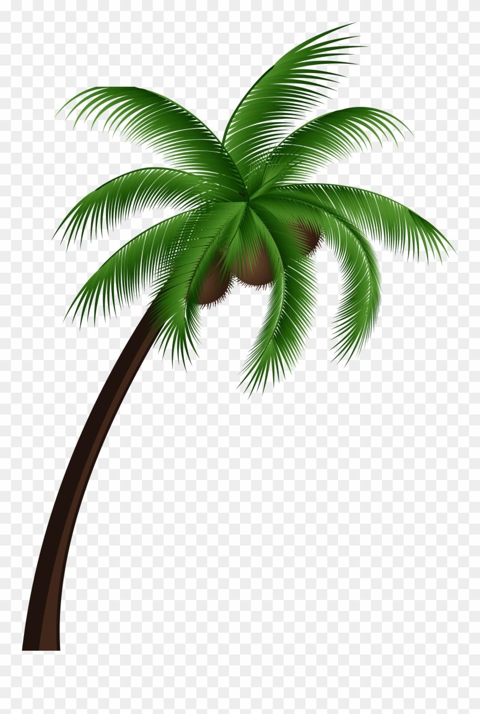 Coconut Palm Tree Png Clip Art Coconut Tree Vector Png Transparent