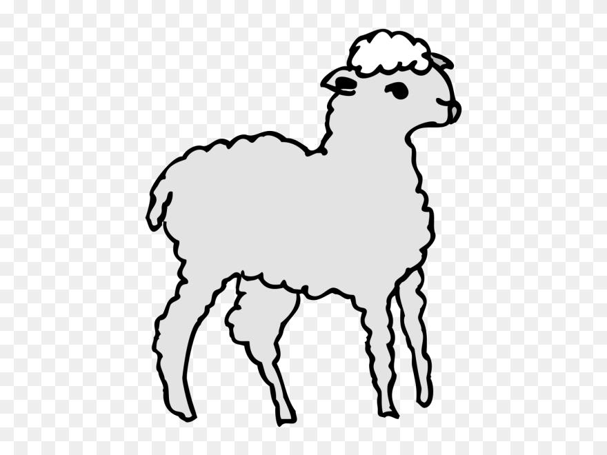 Sheep fluffy. Drawn lamb clipart pinclipart