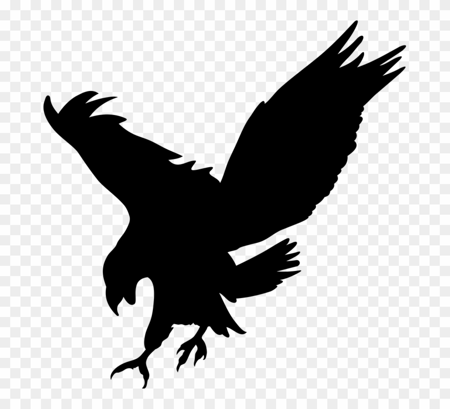 Bird Of Prey Clipart Transparent Png Download 2945720 Pinclipart