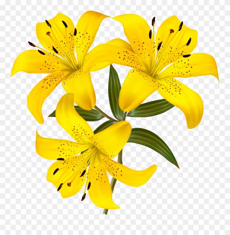 Yellow Lilies Png Clipart Picture Gallery Yopriceville - Yellow Lily Flower Clipart Transparent Png