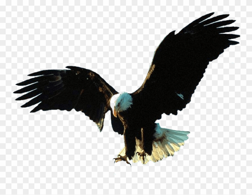 Free Png Download Gif Animation Eagle Gif Png Images Bald Eagle Transparent Gif Clipart 3272425 Pinclipart
