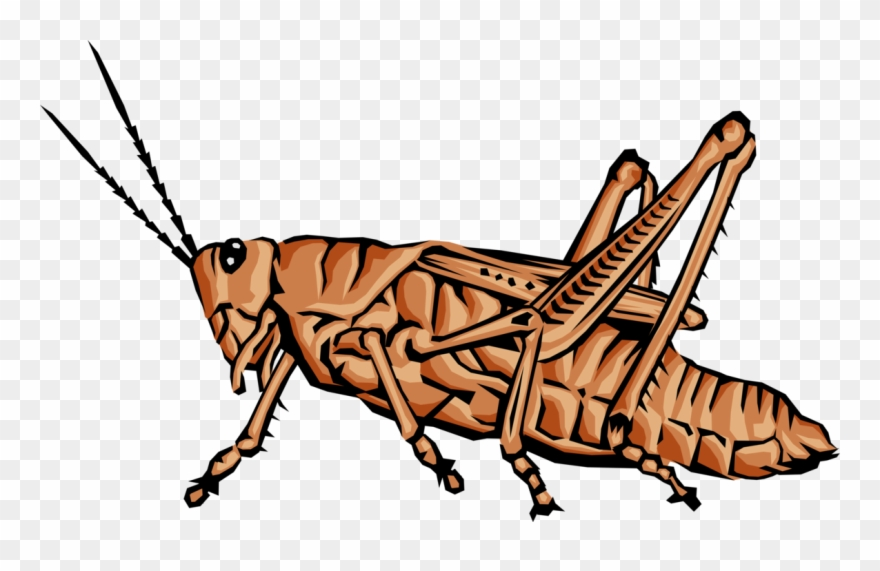 Grasshopper Jumping Clip Art Animals With Jointed Legs Png Download 3401835 Pinclipart