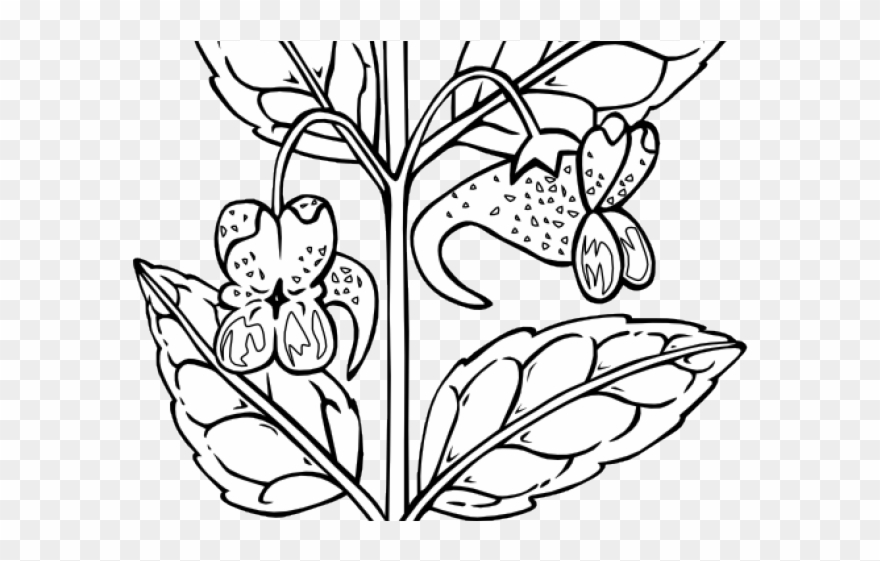 Free PNG Plant Black And White Clip Art Download - PinClipart
