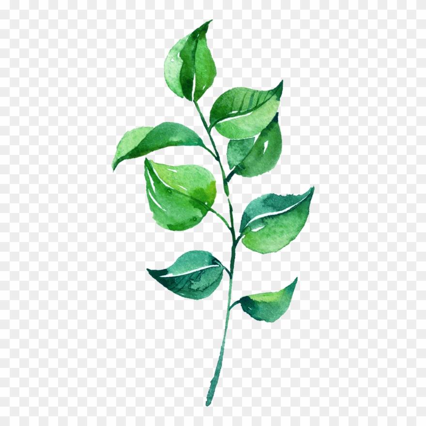 Leaf watercolor. Leaves png pic rose