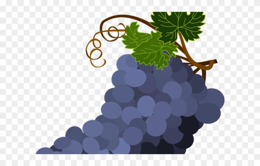 Grapes Pictures Clip Art