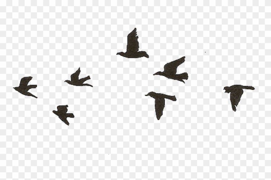 Free Png Download Flying Birds Gif Transparent Png Easy Black Bird Drawing Clipart 3603188 Pinclipart