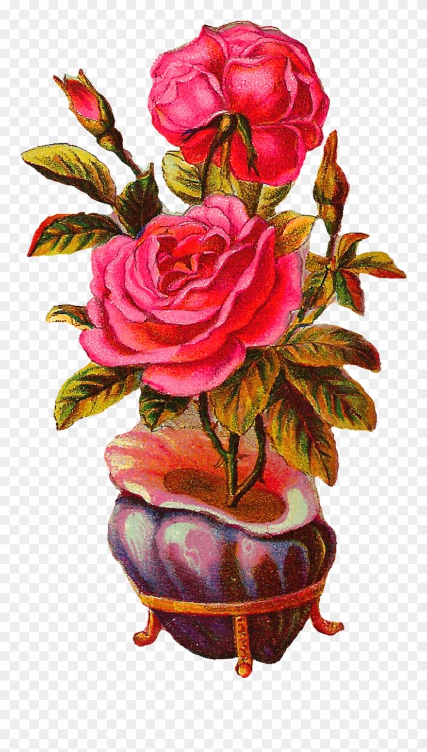 Botanical Vintage Download Pink Rose With Shell Vase Vintage Vase