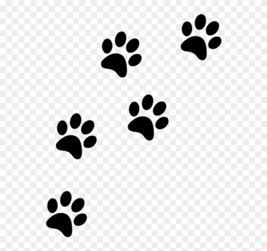 Patte Chat Png Paw Prints Transparent Background Clipart 3715226 Pinclipart They must be uploaded as png files, isolated on a transparent background. patte chat png paw prints transparent