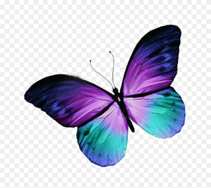13c6f13dc75f8 Butterfly Tattoo Purple Blue Free Hq Image Clipart - Purple And Teal  Butterfly - Png Download