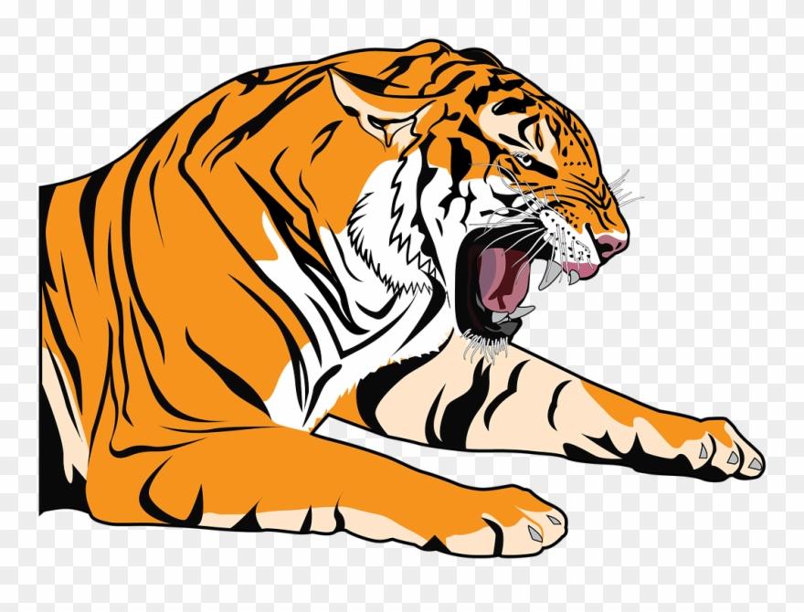 Tiger Clipart Transparent Dibujos Para Dibujar De El Tigre