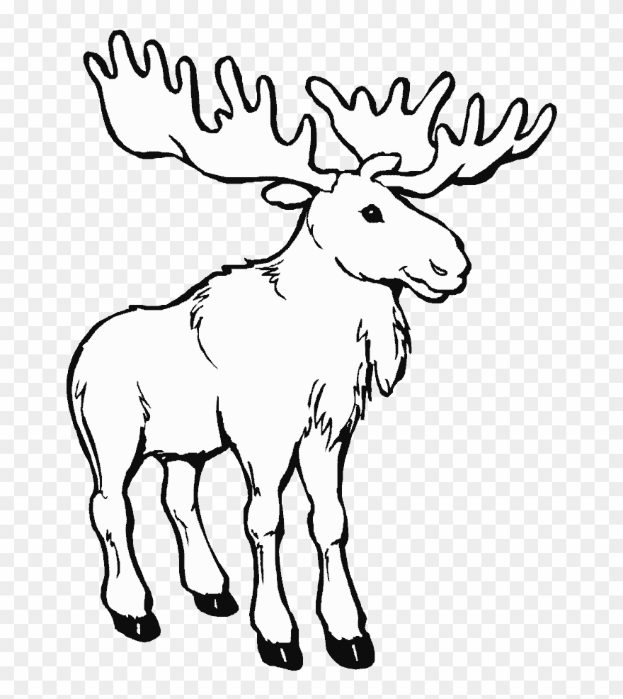 Caribou animals printable pages drawings and canada day coloring pages clipart