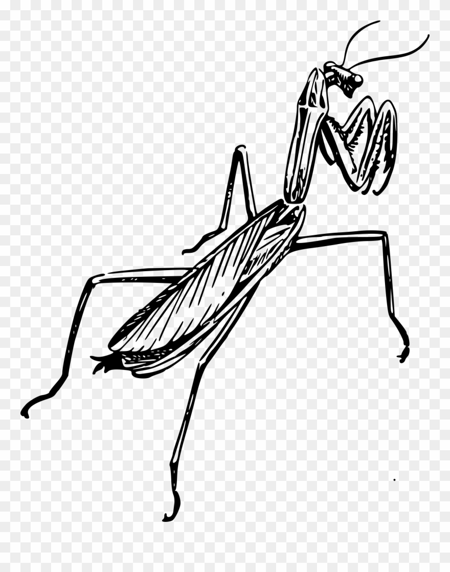30 Trends Ideas Clipart Outline Drawing Praying Mantis Grasshopper