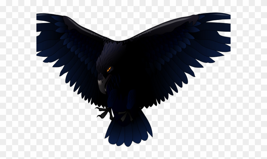 Bird Of Prey Clipart Transparent Transparent Background Raven Png 3925179 Pinclipart
