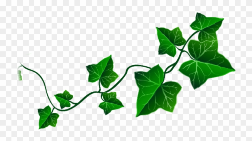 clip art vine leaves - png download (#3973709) - pinclipart  pinclipart.