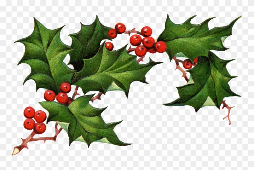 Christmas Holly Png.Christmas Holly Png Christmas Clipart Holly The Best