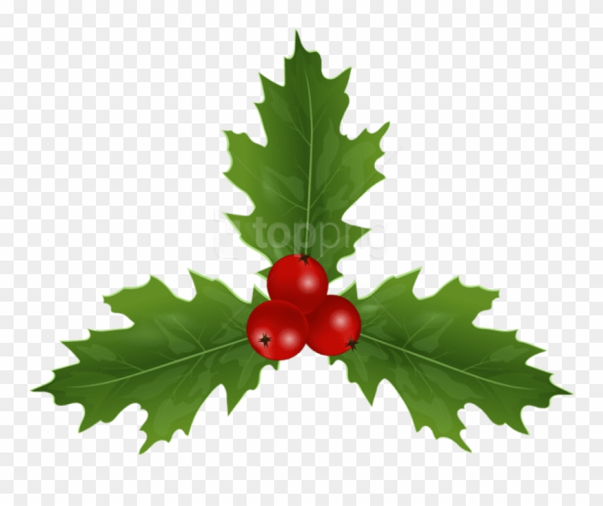 Christmas Holly Clip Art.Christmas Holly Mistletoe Png American Holly Clipart