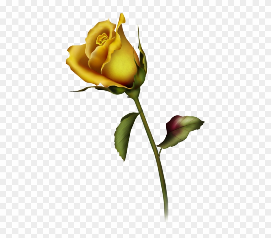 Yellow Rose Bud Art Clipart Rose Bud Tattoo Design Png Download