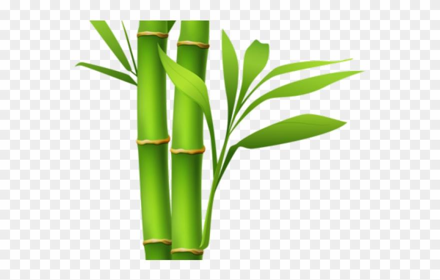 bamboo clipart island border - transparent bamboo clip art - png download  (#4020151) - pinclipart  pinclipart.