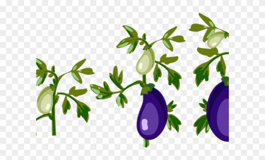 Eggplant Clipart Leaf Cartoon Tomato Plant Png Transparent Png