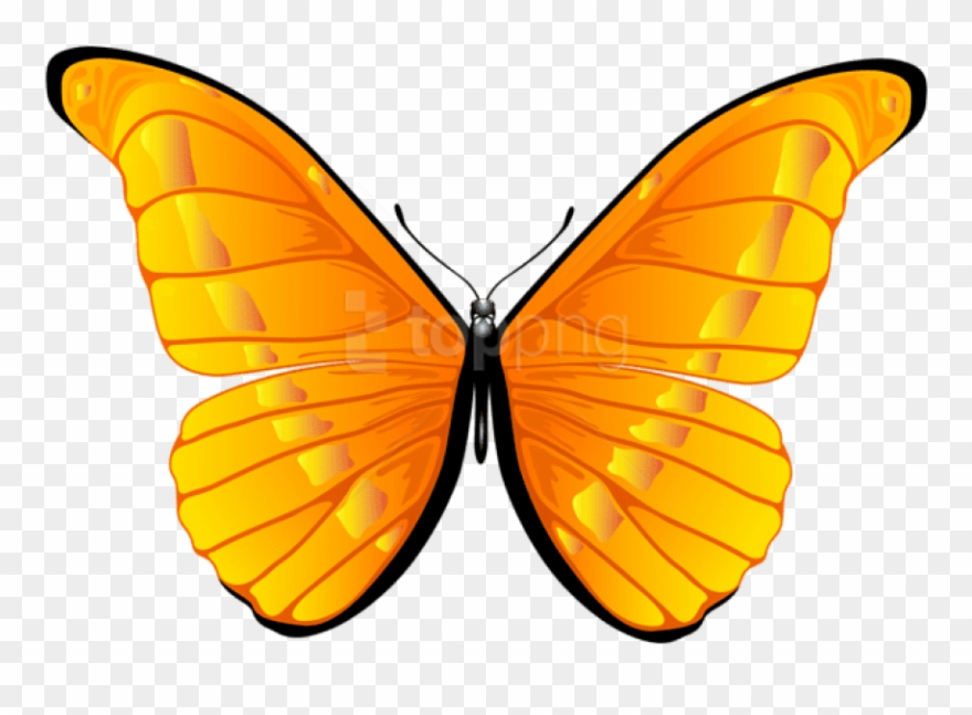 12+ Butterfly Clipart - Preview : Free Clipart Imag   HDClipartAll