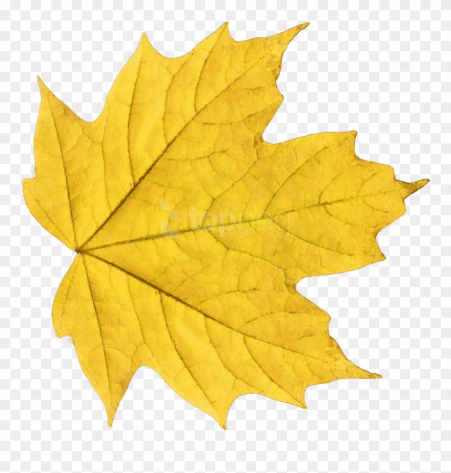 Leaves leaf clip art images free clipart images clipartix ... | 923x880