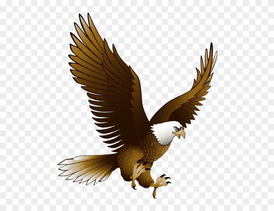 Eagles transparent background. Eagle clipart png pinclipart