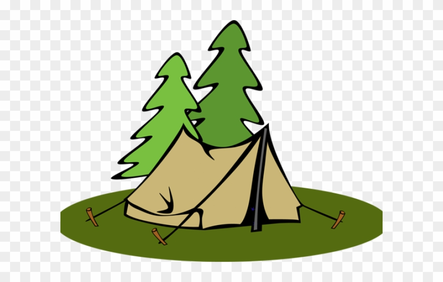 Camping transparent. Pine tree clipart background