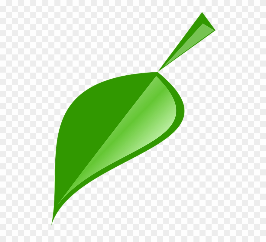 Green Leaves Clipart Single Green Leave Single Neem Leaf Logo Png Download 428395 Pinclipart
