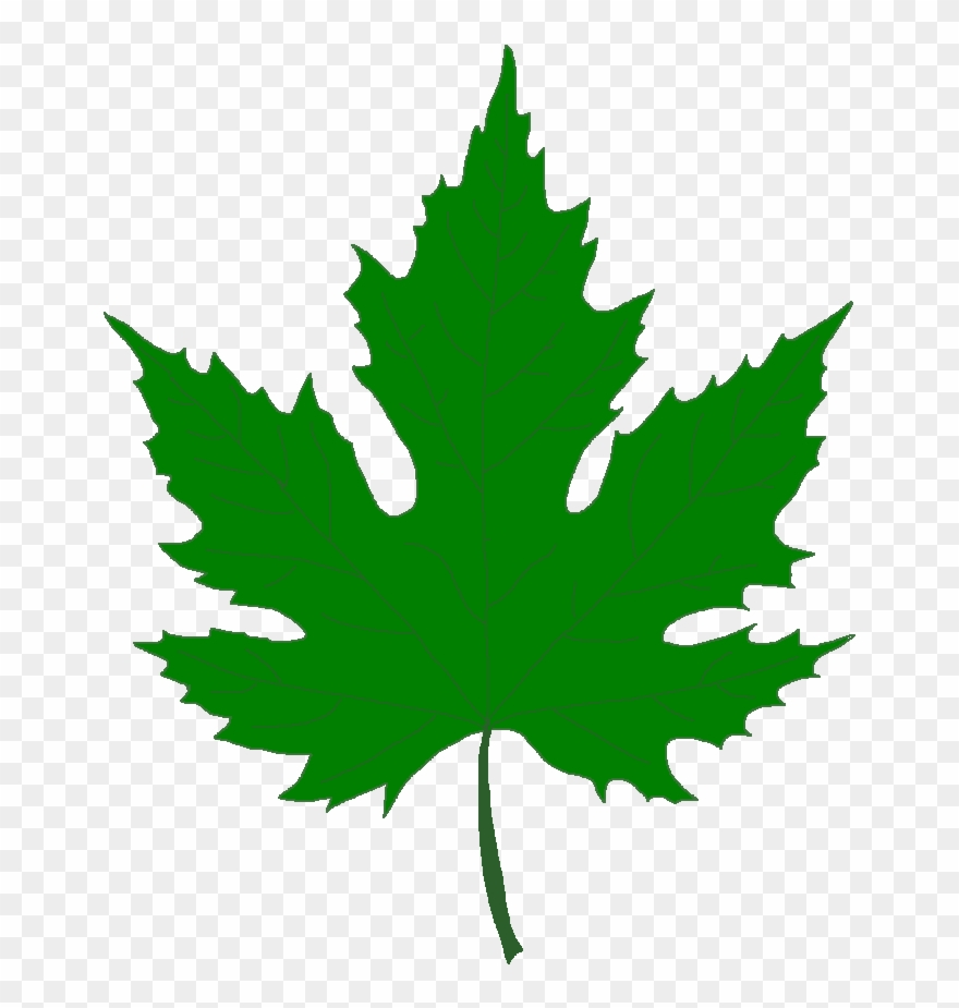 Silver Maple Tree Green Maple Leaf Png Clipart 429508 Pinclipart
