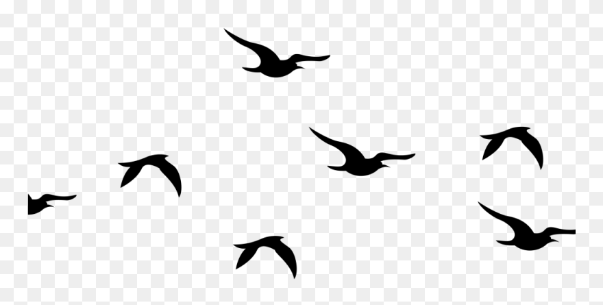 Birds silhouette. Flying png clipart pinclipart