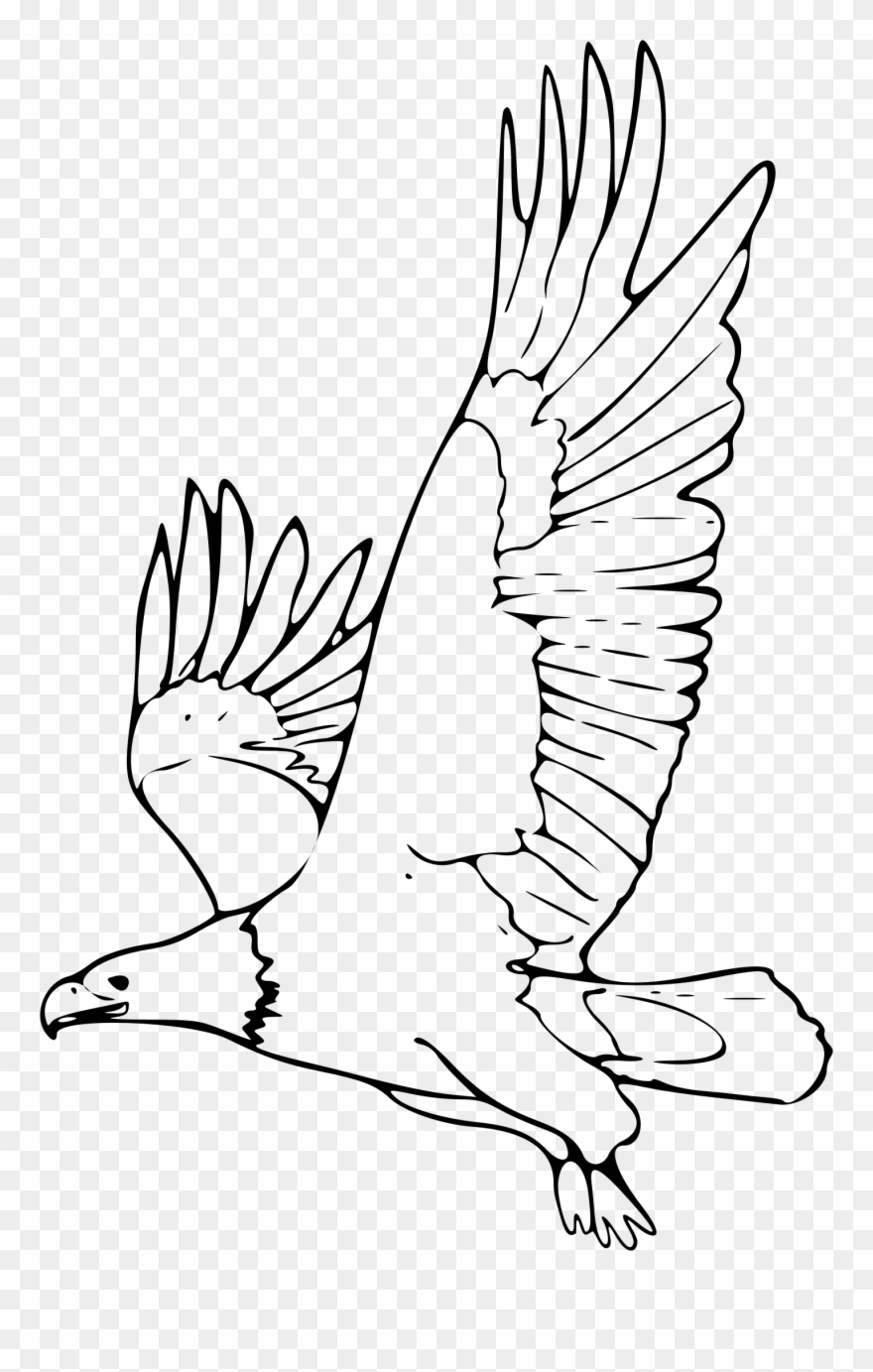 Eagle outline. Bald clipart picture of