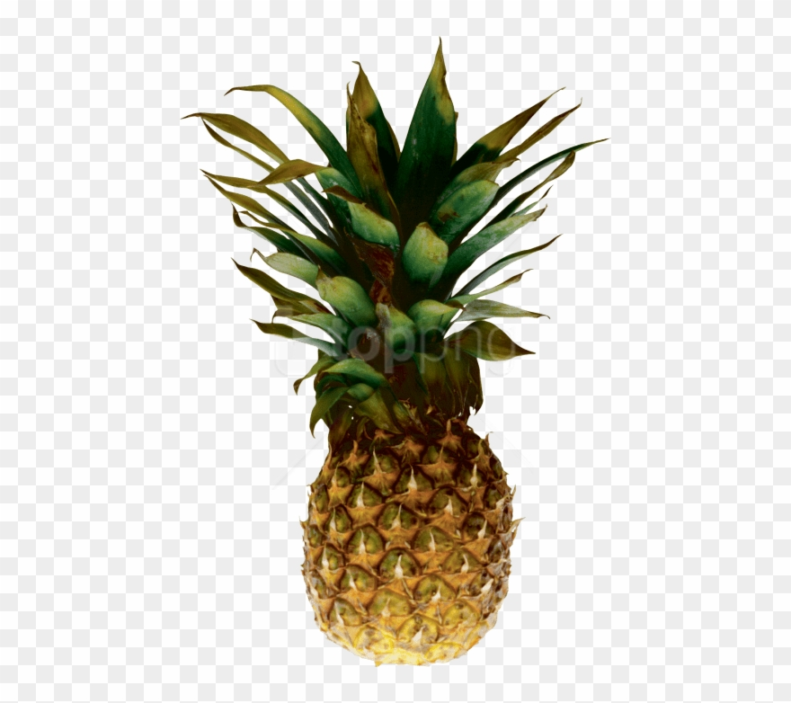 Free Png Download Pineapple Png Images Background Png Pineapple Transparent Background Clipart 4246072 Pinclipart Sliced pineapple, pineapple food, a piece of pineapple transparent background png clipart. free png download pineapple png images