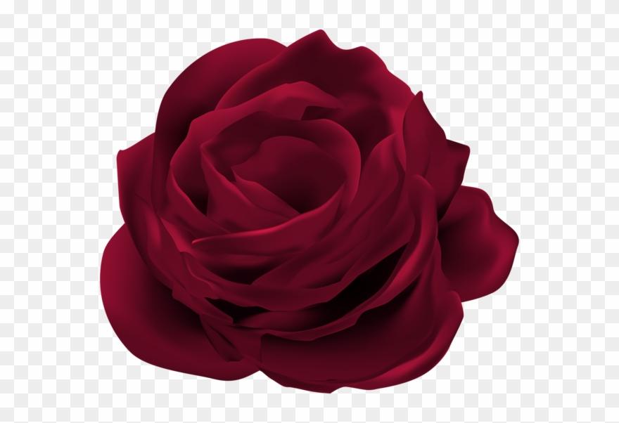 dark red rose flower png clip art image bunga mawar merah png transparent png full size clipart 439614 pinclipart dark red rose flower png clip art image