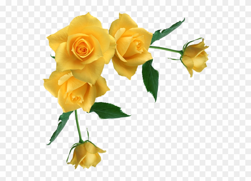 Rose Corner Cliparts - Yellow Roses Transparent Background - Png Download
