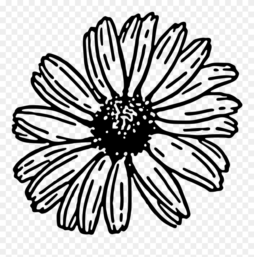 Flower black and white daisy. Clipart png download pinclipart