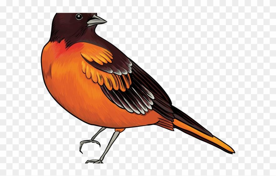Bird realistic. Kiwi clipart transparent clip