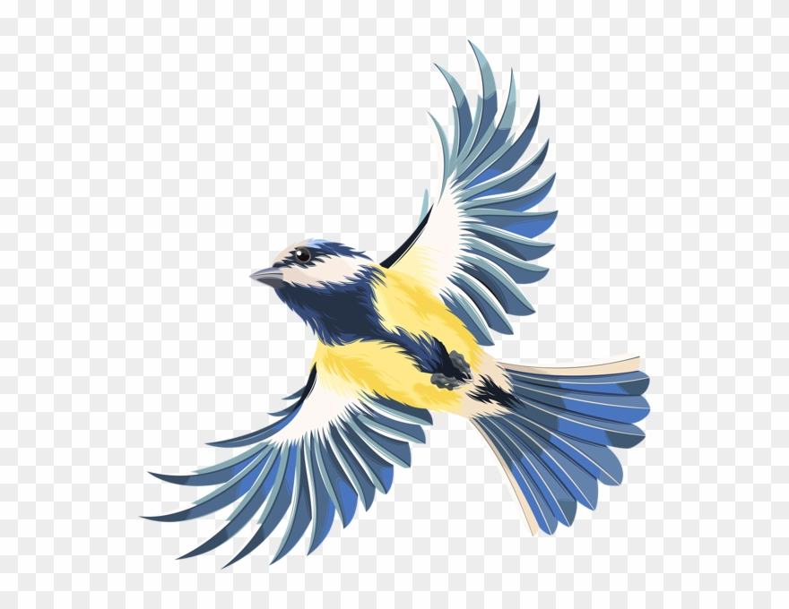 Birds transparent. Graphic freeuse stock flying