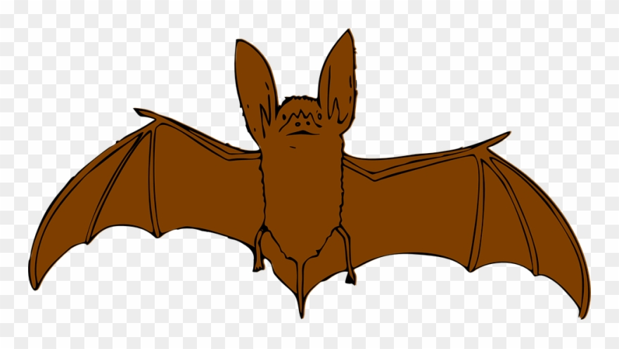 Bat animal. Clipart with open wings