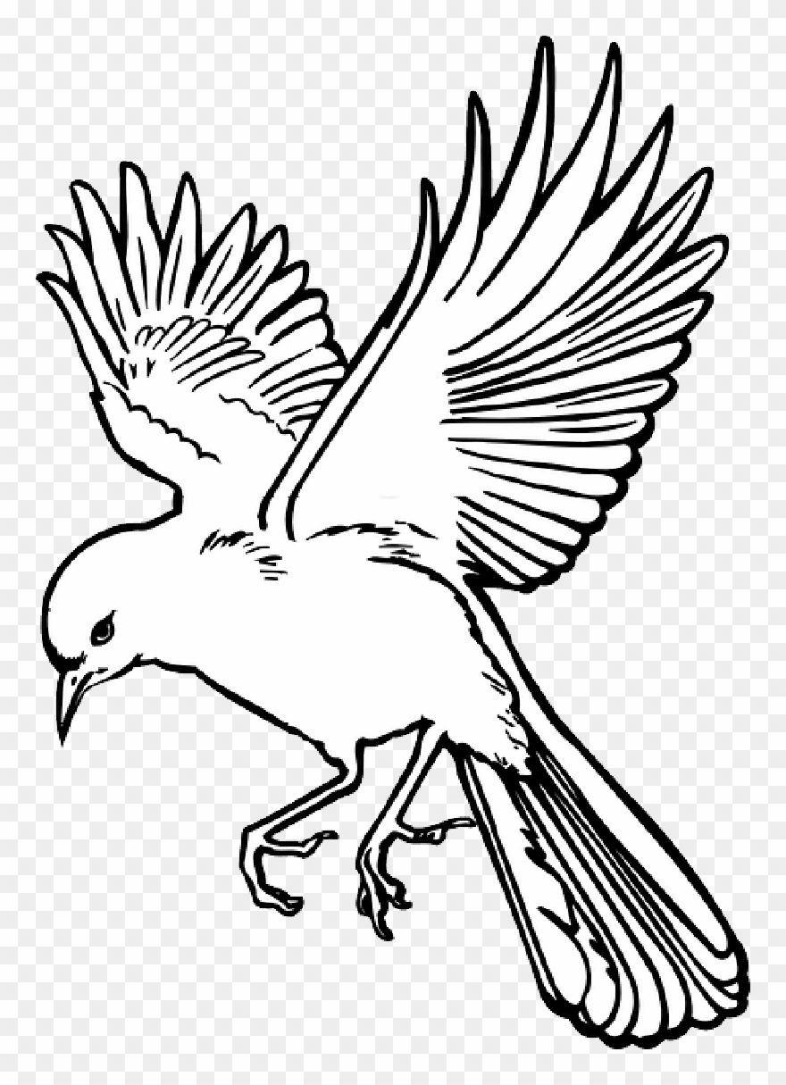 Fairy - Wings - Outline - Flying Bird Line Drawing Clipart ...