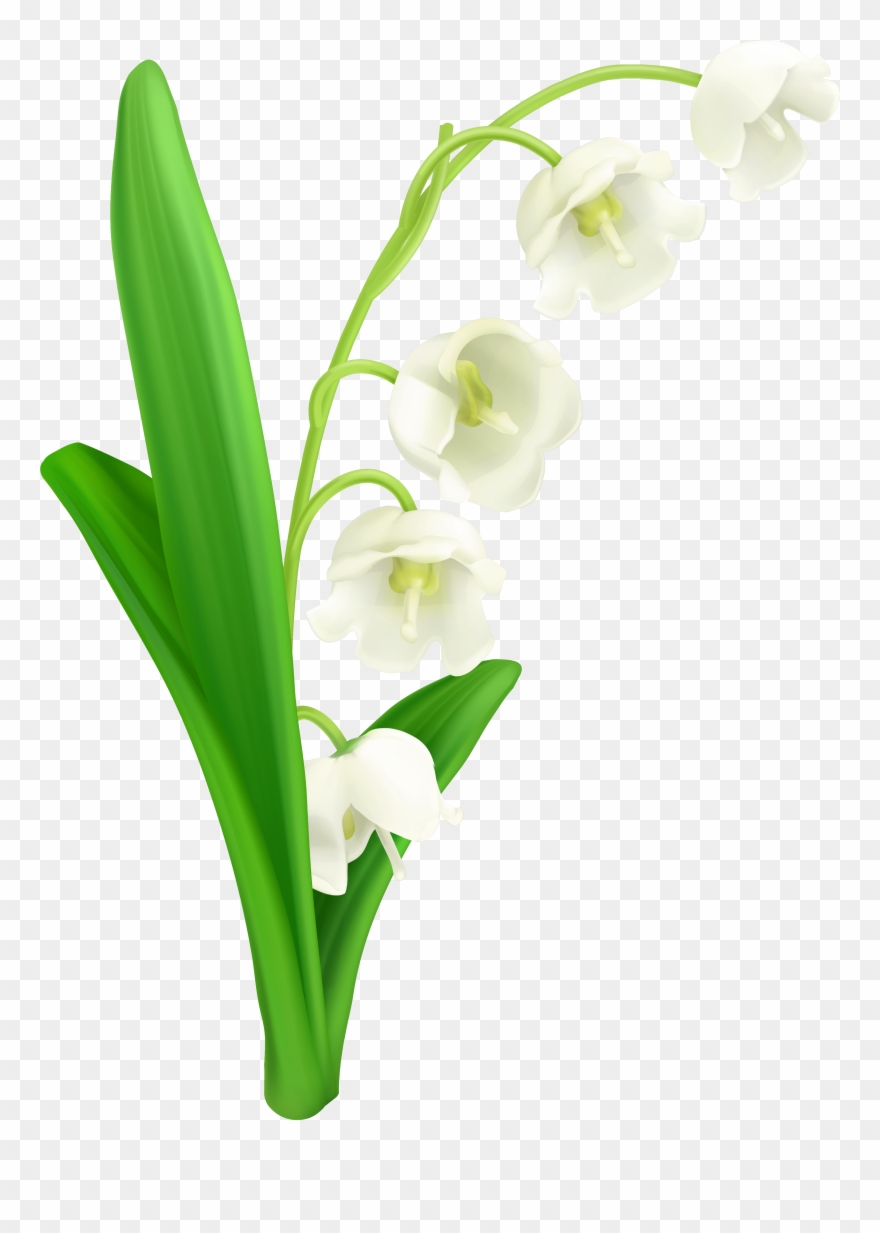 Lily Of The Valley Png Clipart Gallery Yopriceville - Lily Of The Valley Svg Transparent Png