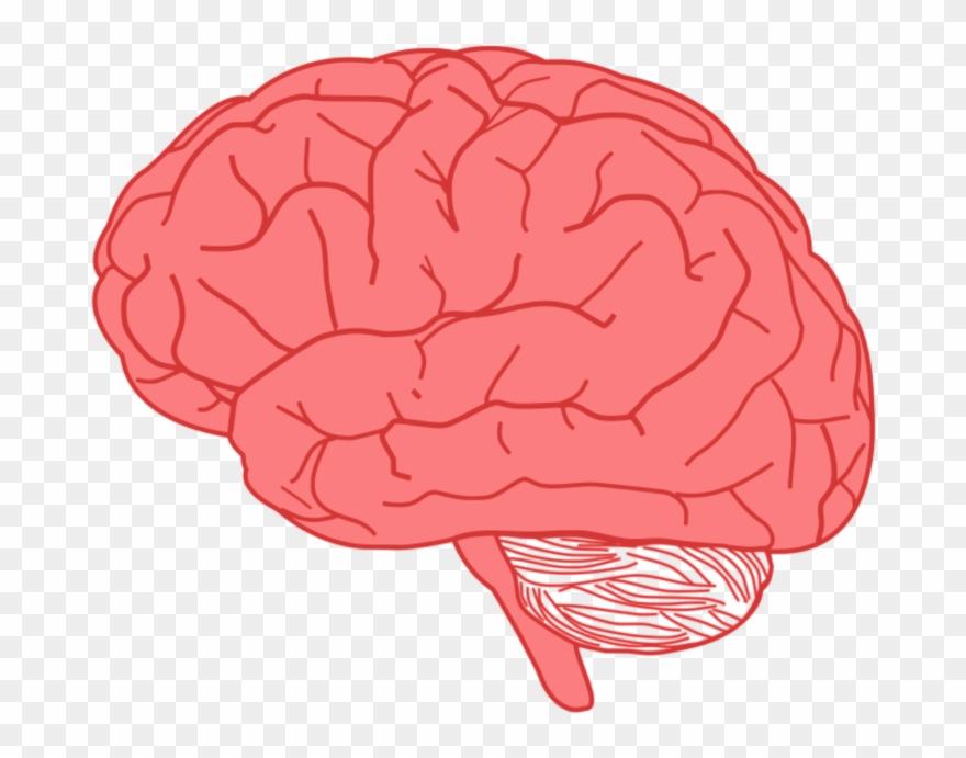 brain sticker transparent background brain clipart png download 4881696 pinclipart brain sticker transparent background