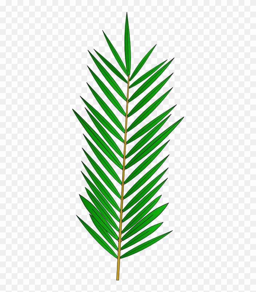 Desenho Folha De Palmeira Png Clipart 495795 Pinclipart