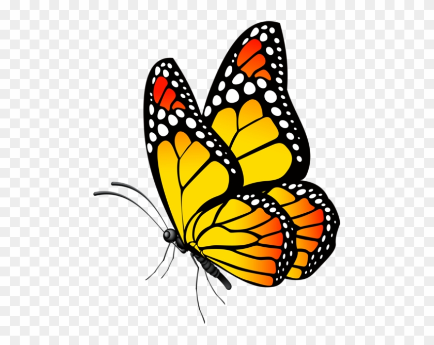 Download Butterfly Clip Art, Butterfly Drawing, Butterfly ...