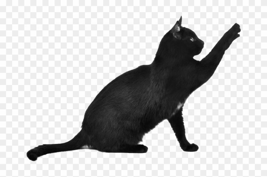 Permalink To 99 Awesome Black Cat Png Ideas , Black Cat