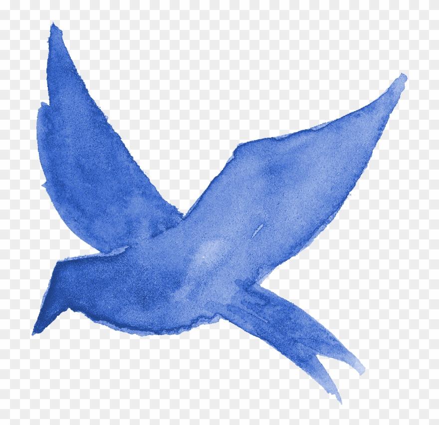 Bluebird software download
