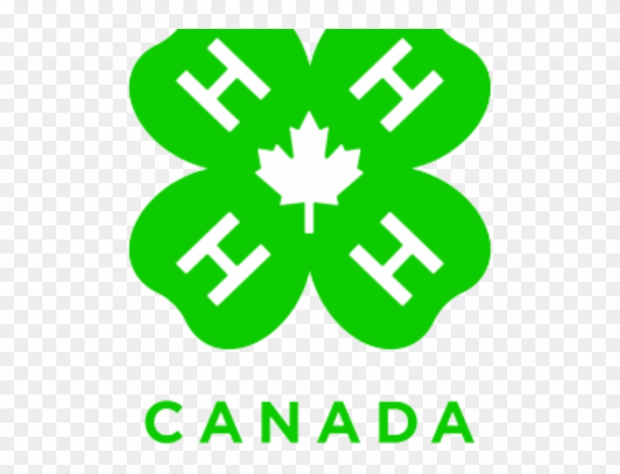 entracing-4-h-clover-clip-art-club-clipart-pencil-and-in-color.jpg | East  Meadows