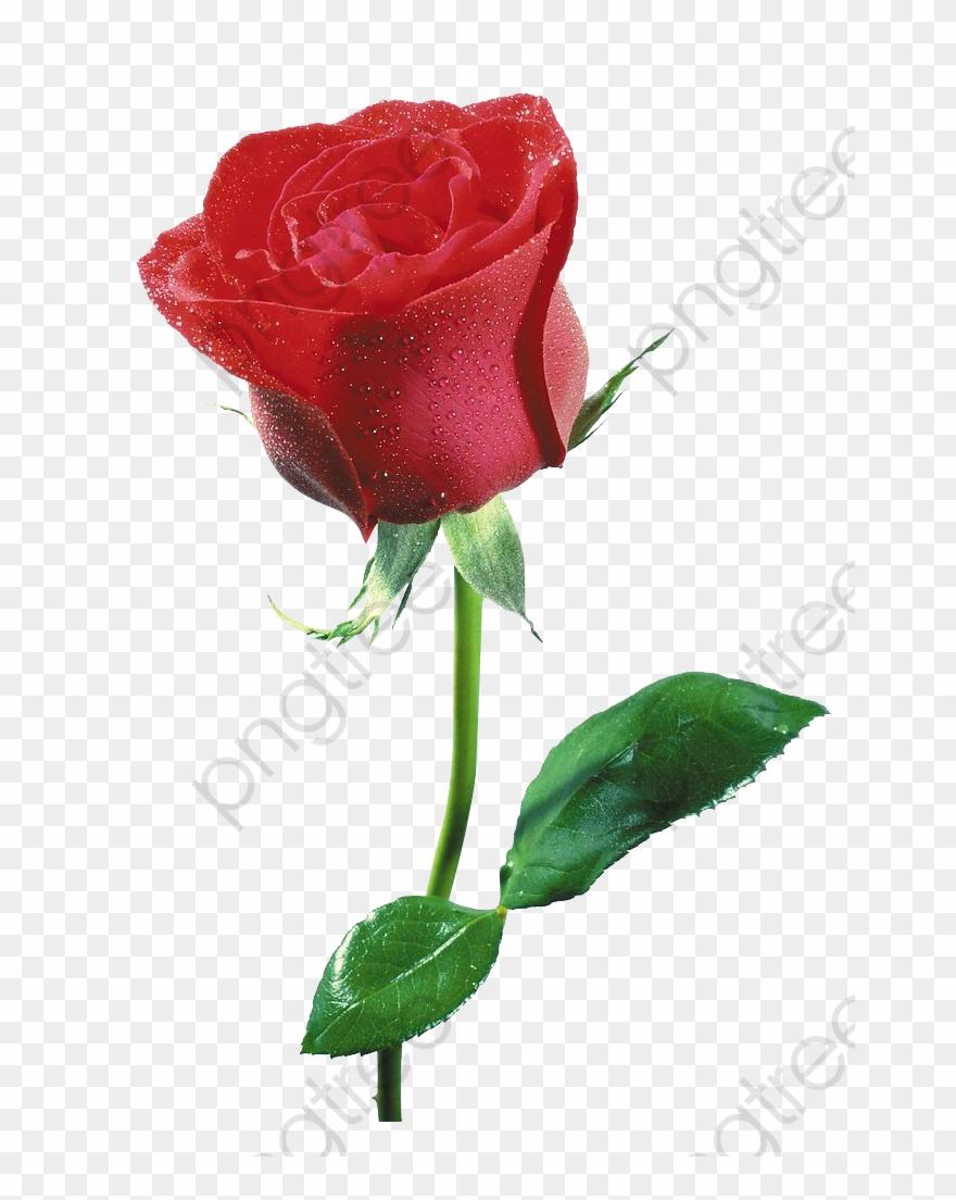 Free Flowers Clipart Commercial Use - Flor Imagenes De Rosas