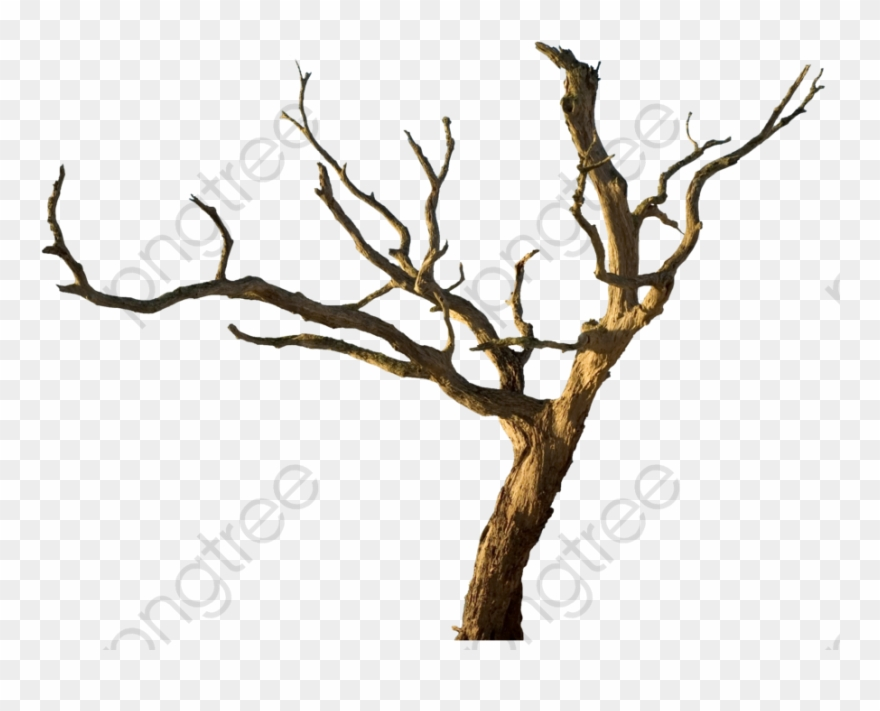 Tree Trunk Clipart Cartoon Dead Tree Png Transparent Png 4995571 Pinclipart Tree trunk drawing snag branch, tree, leaf, branch, plant stem png. tree trunk clipart cartoon dead tree